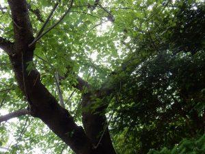 叶神社 横須賀 ご利益 御朱印 パワースポット 拝観時間 駐車場 地図 アクセス 見どころ 20