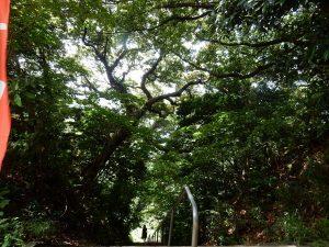 叶神社 横須賀 ご利益 御朱印 パワースポット 拝観時間 駐車場 地図 アクセス 見どころ 46