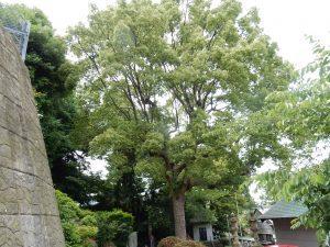 走水神社 横須賀 ご利益 御朱印 パワースポット 拝観時間 駐車場 地図 アクセス 見どころ 08
