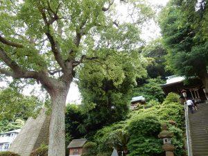 走水神社 横須賀 ご利益 御朱印 パワースポット 拝観時間 駐車場 地図 アクセス 見どころ 33