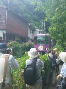 御霊神社江ノ電と紫陽花