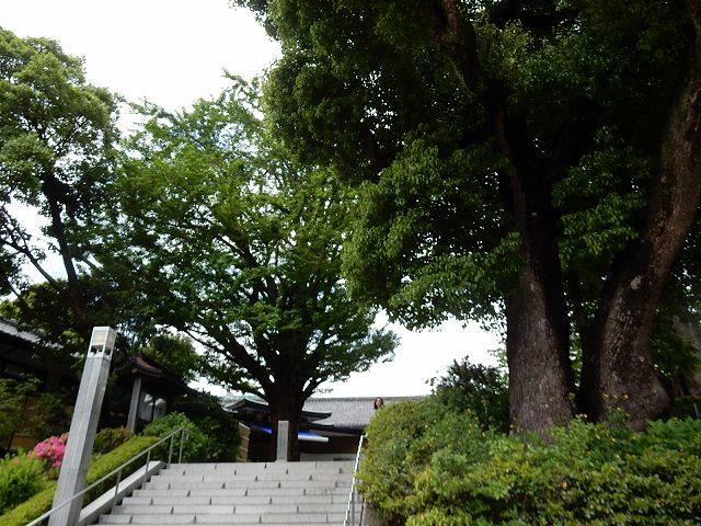 日枝神社山王下側階段